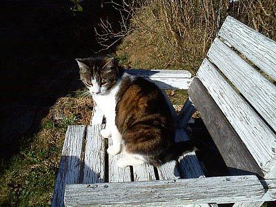 Katten Kajsa